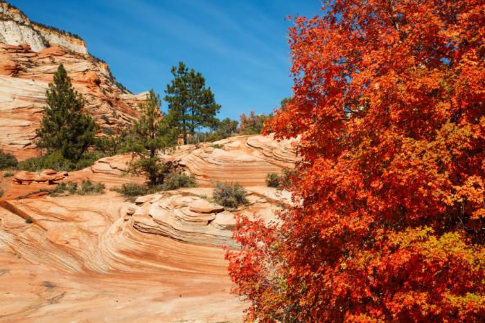 Zion Rv Park >> The Top 10 Fall RV Destinations in the U.S.