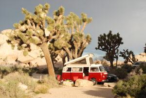 summer campsites Joshua Tree