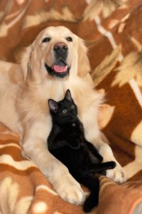 dog and cat in RV