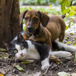 keep your RV pet hair free