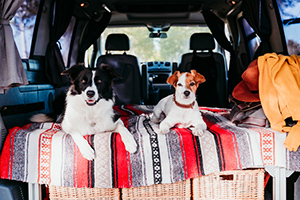 2 dogs in a van